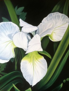White Iris by Anna Ayres