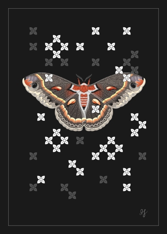 Cecropia Moth-01